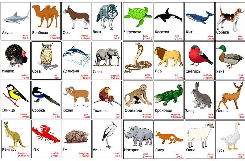 картинки животных для детей скачать бесплатно | Дети ...
