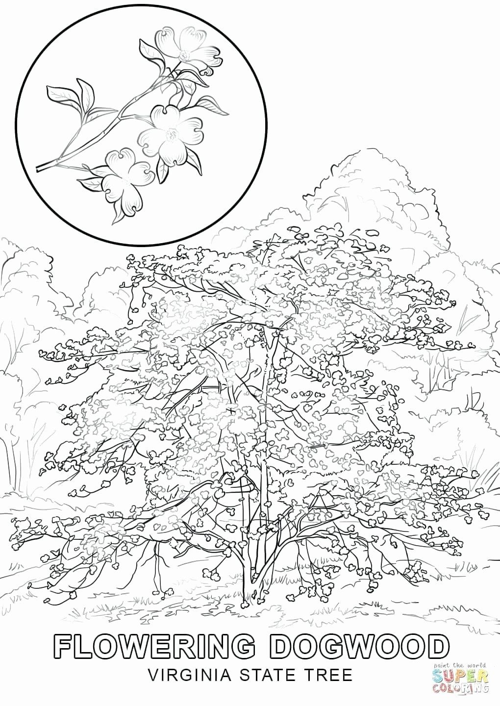 Coloring pages tree of life elegant virginia coloring page