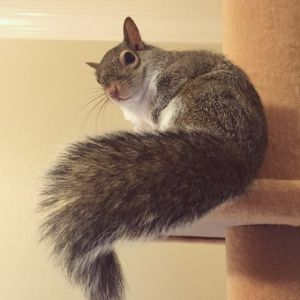 squirrels with pretty tail