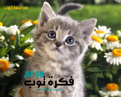 أجمل صور قطط كيوت Hd في العالم 2019 4 Cats Animals