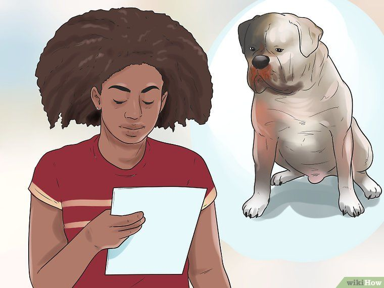 Raise An American Bulldog American Bulldog Breeders American