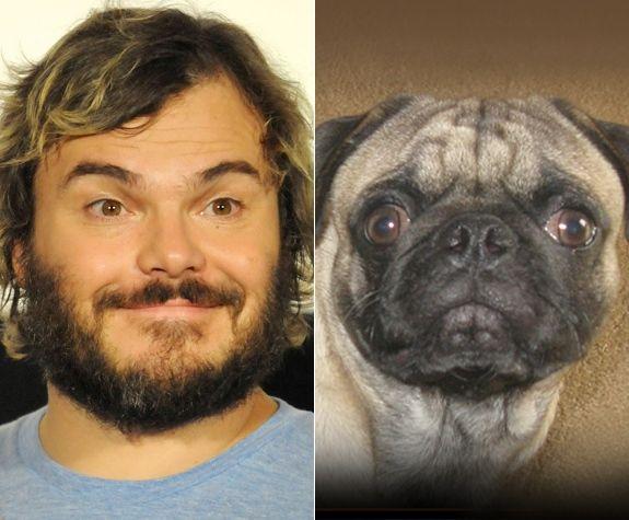 Celebrity Animal Look A Like Jack Black A Pug Ny Daily News