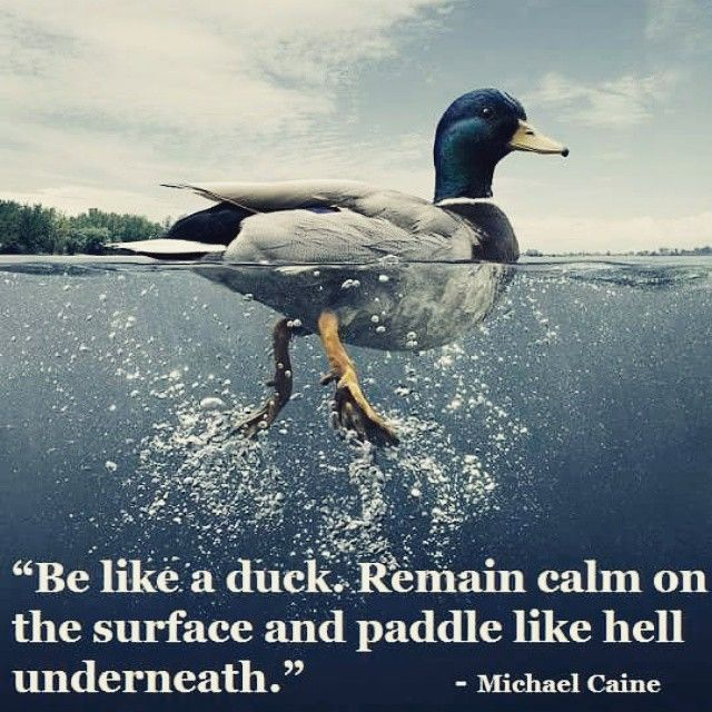 Be Like A Duck Remain Calm On The Surface And Paddle Like Hell