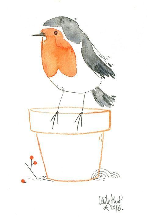 Rouge Gorge Cecile Hudrisier Dessin Oiseau Oiseau En Aquarelle