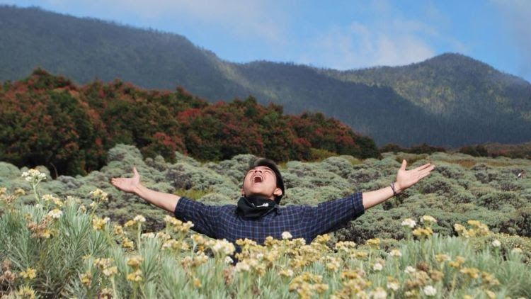 Foto Bunga Edelweis Keren Meski Namanya Bule Bunga Edelweiss Ternyata Spesial Banget Lho Buat Kata Kata Romantis Bunga Edelweis Di 2020 Bunga Wallpaper Bunga Gambar