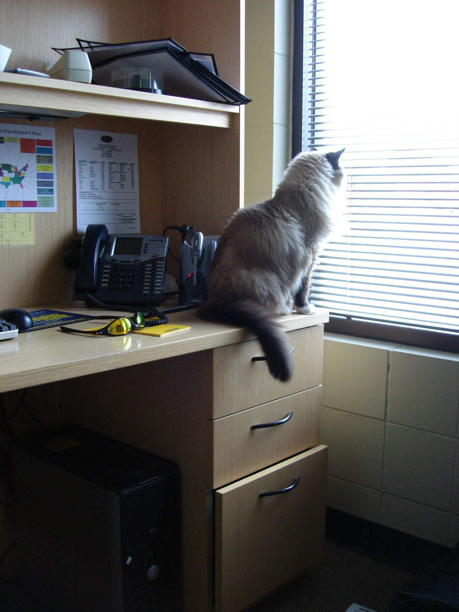 Take your #cat to the office #pets