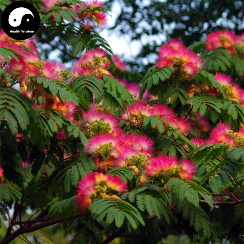 Buy Albizia Julibrissin Tree Seeds 120pcs Plant Pink Silk Tree Siris Acacia Sponge Tree Seeds Albizia Tree Silk Tree