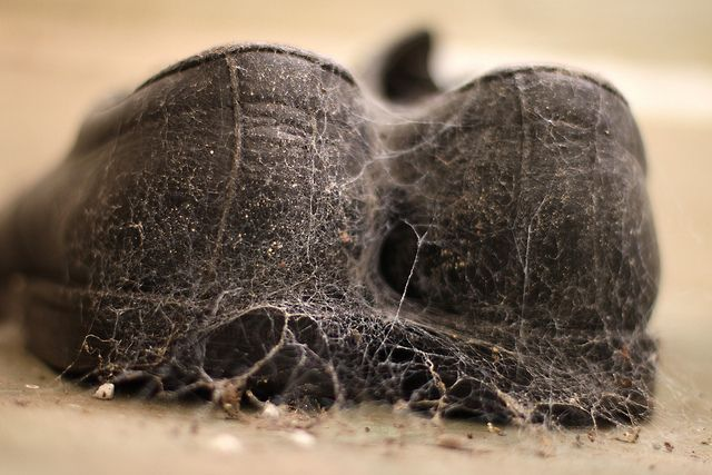 Left behind shoes with spiders making claim