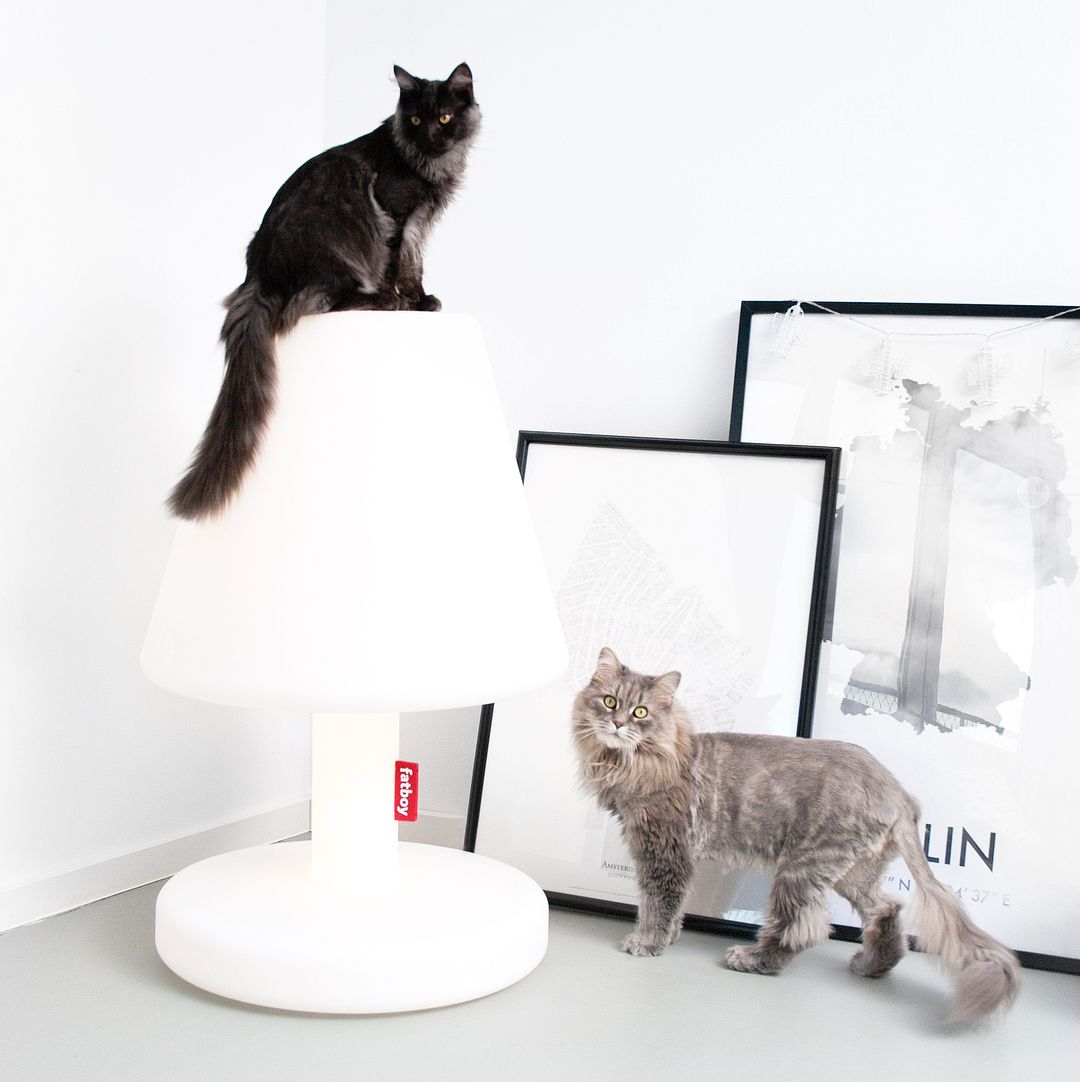 The Only Lamp Your Cat Won T Break Fatboyoriginal Modern White Floor Lamp Lamp White Floor Lamp