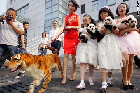 China's latest craze: dyeing pets to look like other wild animals