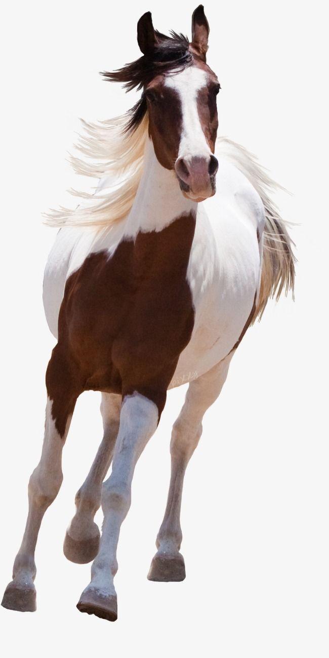 Ma Horse Background Horses American Paint Horse
