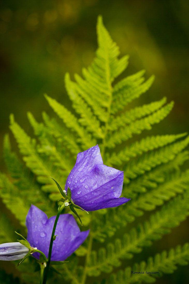 combo blue and green (flower bluebell) by roisabborrar