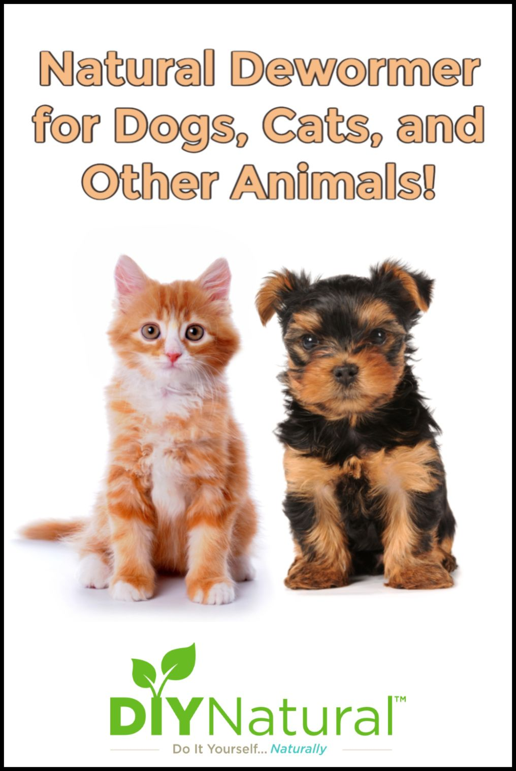 Natural dewormer for dogs and cats it also works for