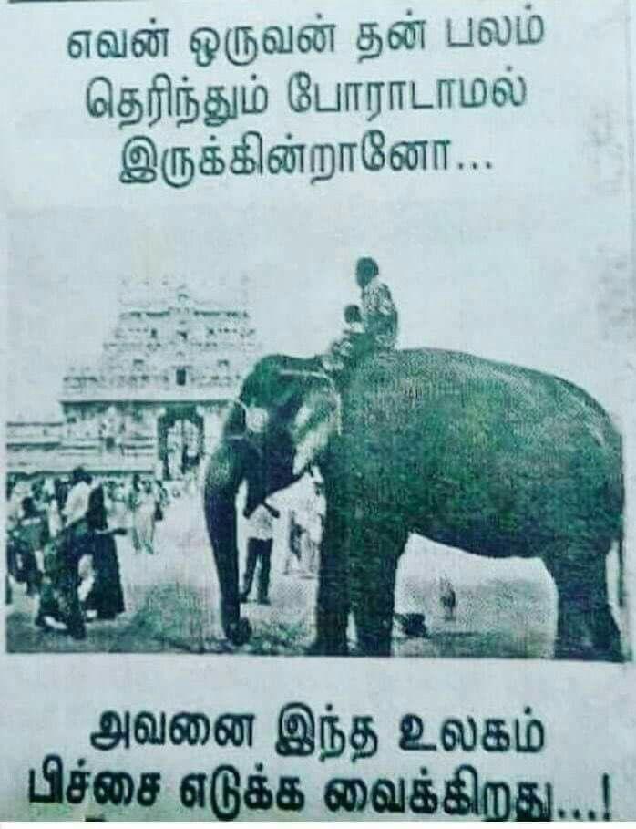 Vijaiprakash H Tamil Motivational Quotes Motivational Quotes