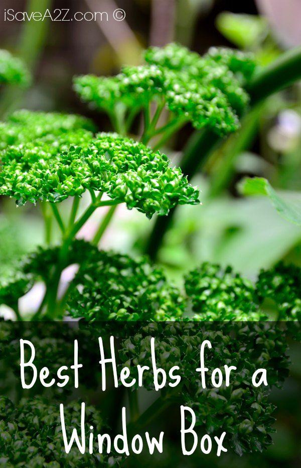 Best Herbs For A Window Box Isavea2z