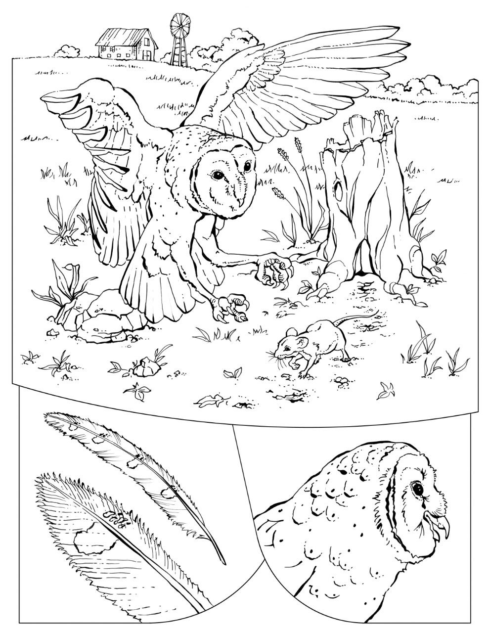 Coloring Book: Animals (A to I) | National geographic animals, Owl ...