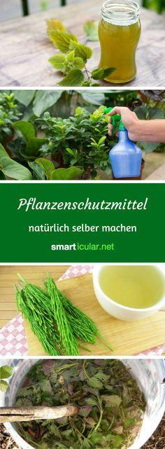Bio Spritzmittel Gegen Schadlinge Und Pflanzenkrankheiten Selber