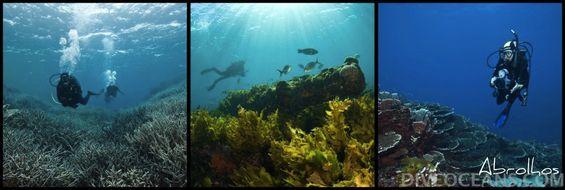 DIVE OCEANS | Abrolhos Island Cruise Tour  8 ~ 9 Dive 3 泊 4 日