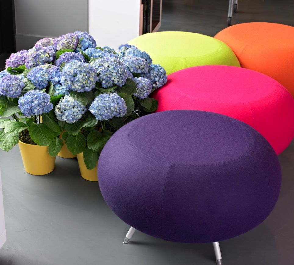 Colorfull hydrangeas balls