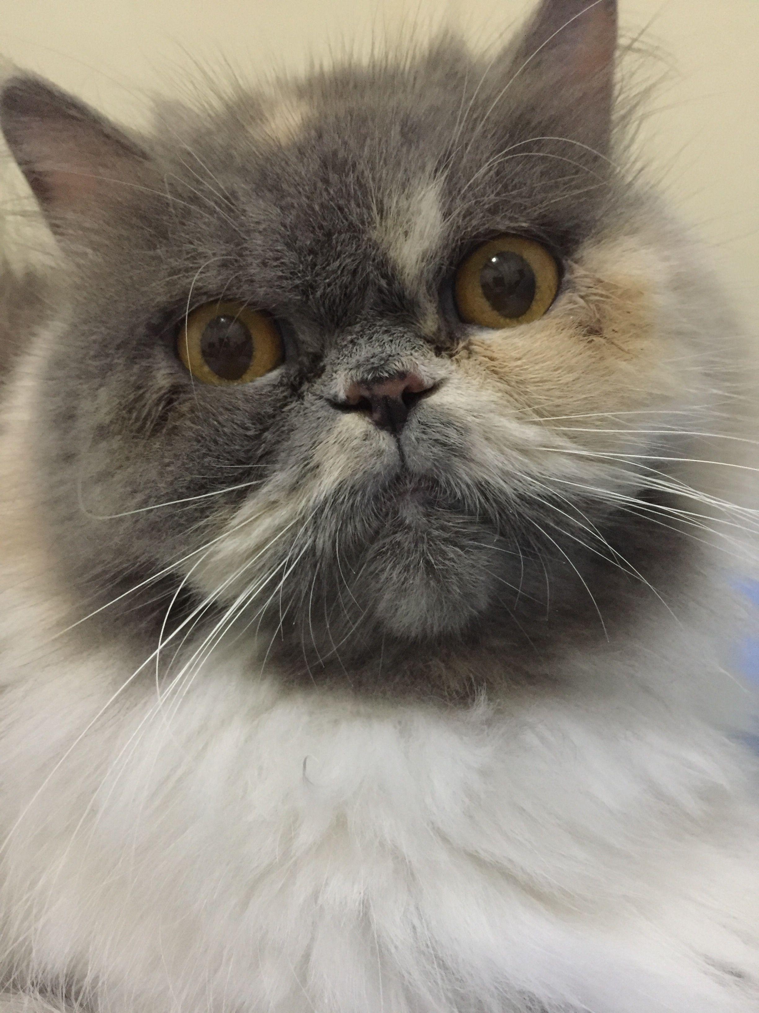 My Face Kucing