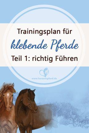 Klebendes Pferd: Trainingsplan für Pferde mit