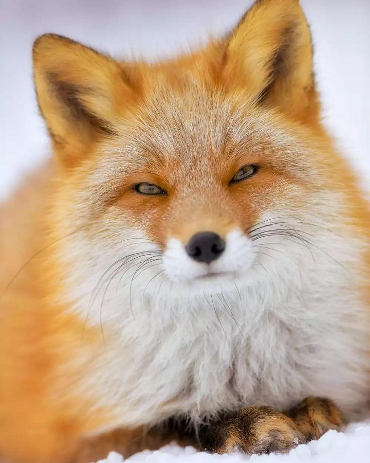 Pin Ot Polzovatelya Brandi Rich Na Doske Animals Milye Zhivotnye Zhivotnye Lisa