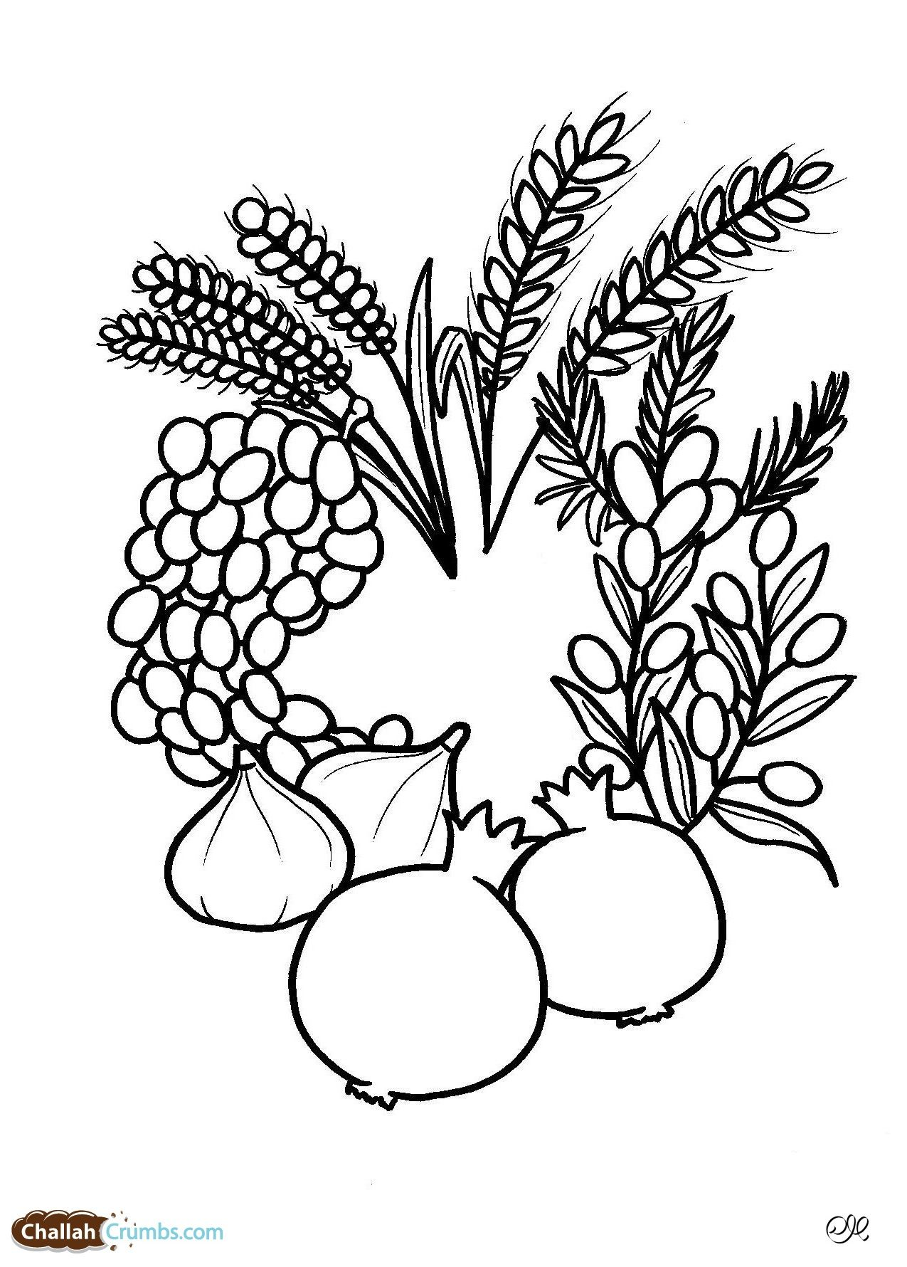A Great Seven Species Coloring Sheet Tu B Shevat Tu B Shevat Coloring Pages