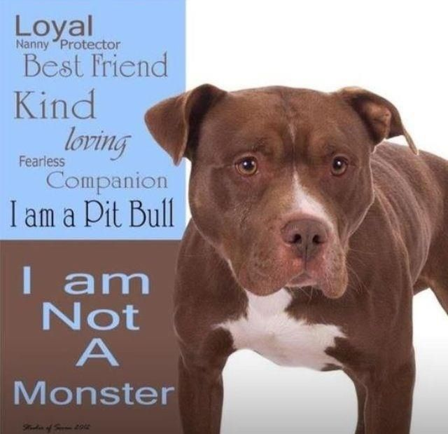 . My Pitt Bull is the biggest baby in the world. If you treat them right, they will live you and not hate you.
