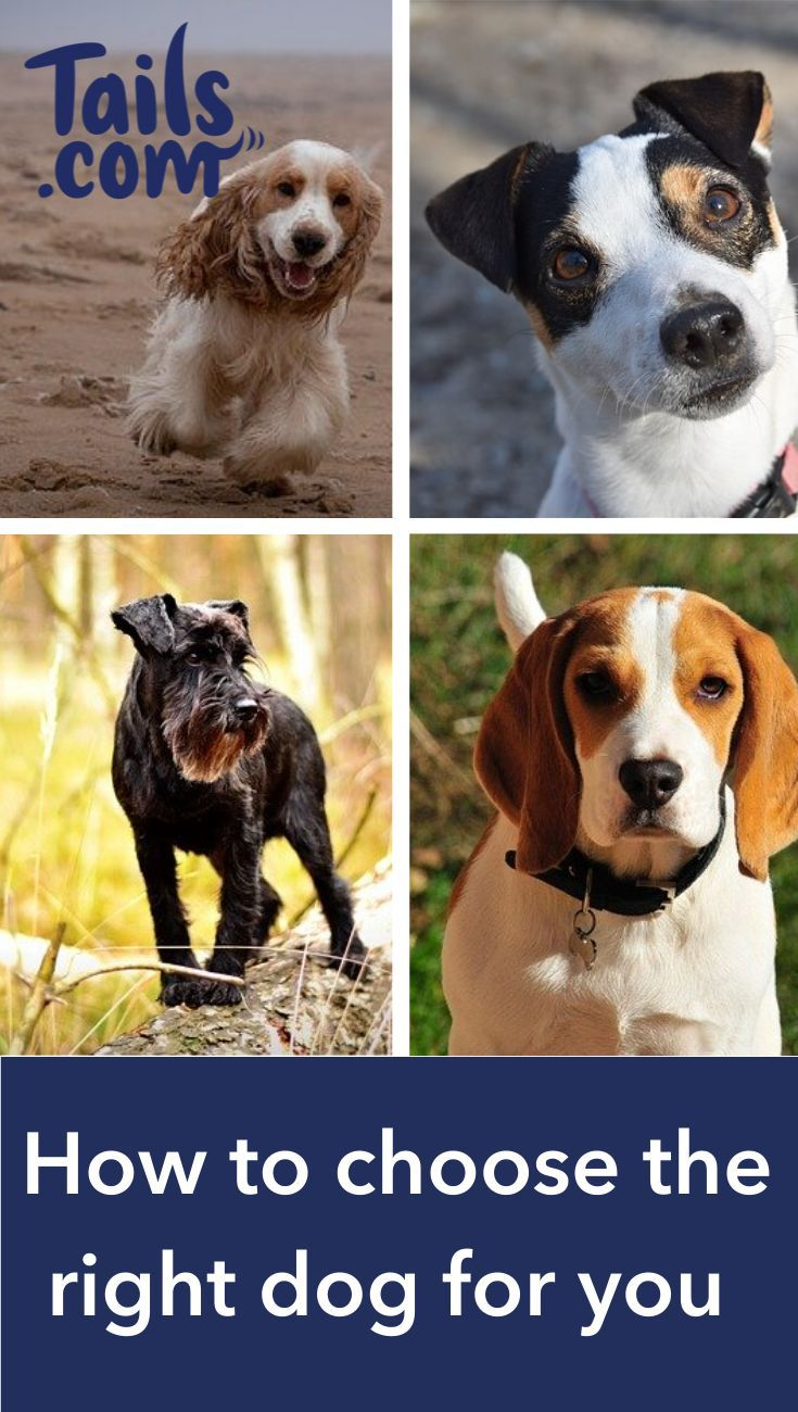 what type of dog should i buy