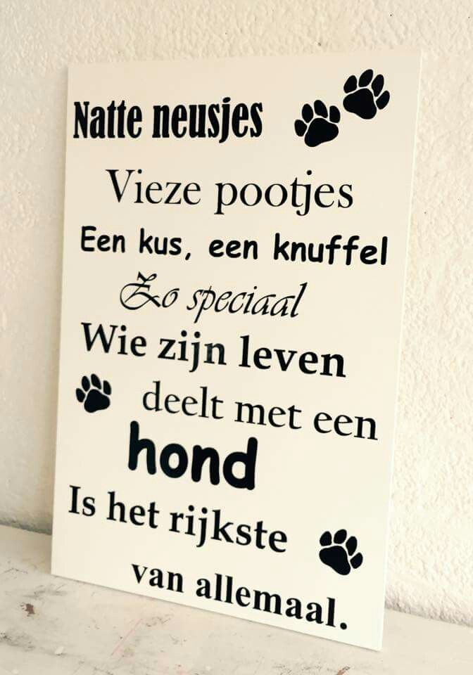 honden spreuken Spreuken en teksten | German Shepherd DIY | Dogs, Dog quotes, Dog love honden spreuken