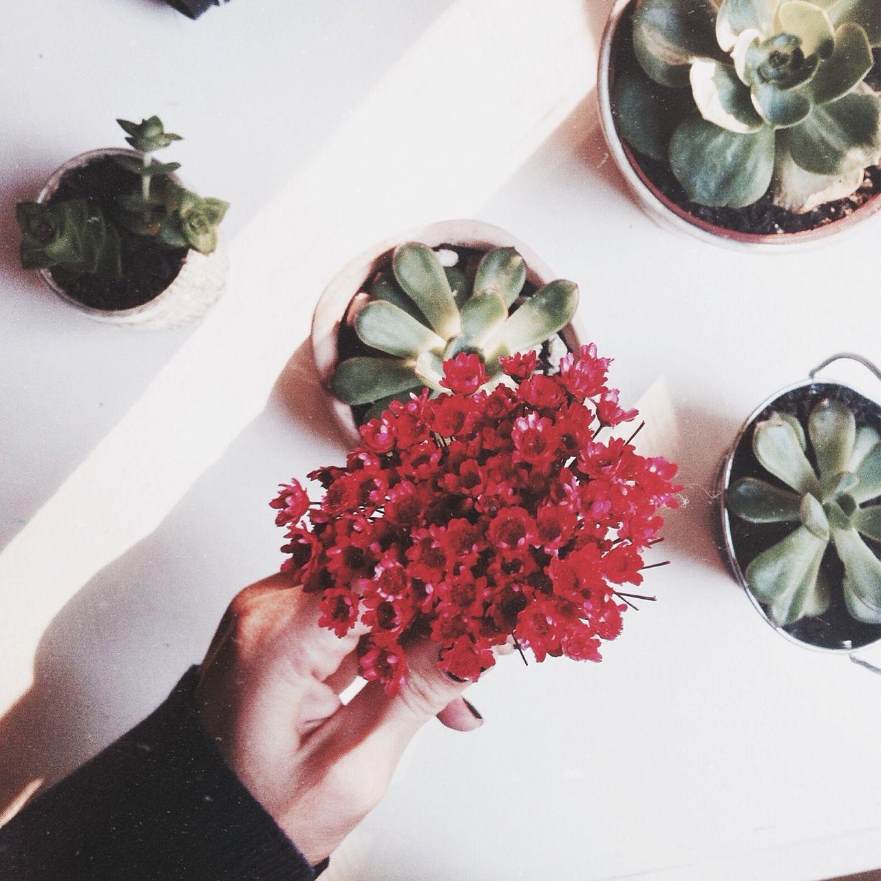 #vintage #flower #suculent #plants