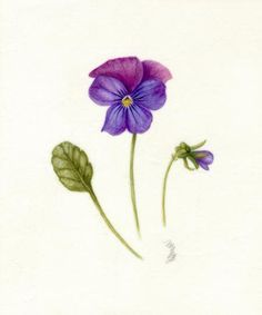 Purple African Violet Flower Meaning Loyalty Devotion Tattoo