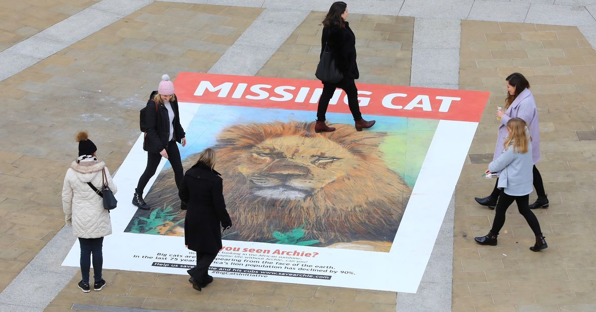 Why Are There Huge Posters Of A Missing Cat In Manchester Cat Posters Missing Cat Poster Majestic Animals
