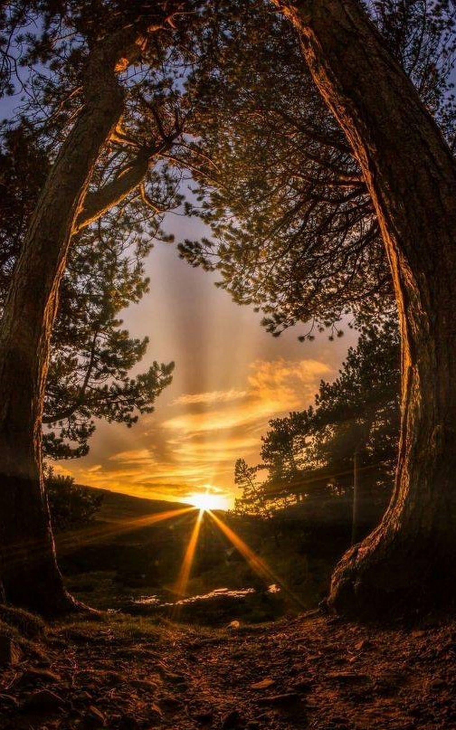 Good Morning Dear Friends Beautiful Nature ѕαναş ρσlαт Google