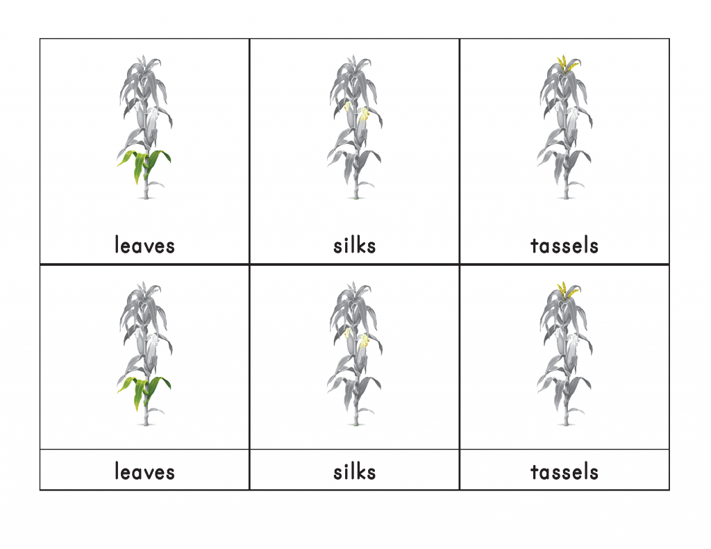 Corn 3 Part Cards