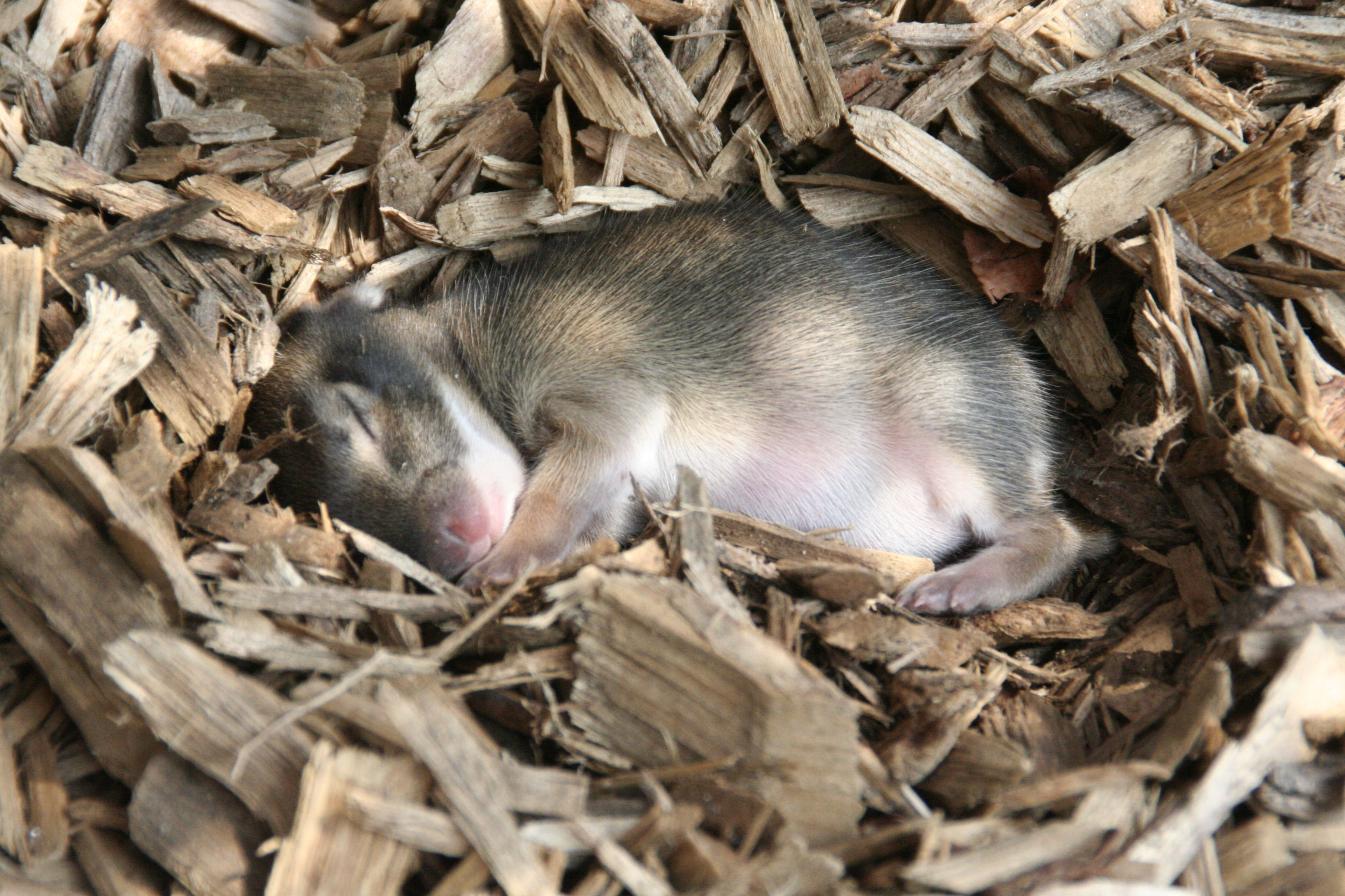 Baby rabbits found at the CanDo playground at Alapocas