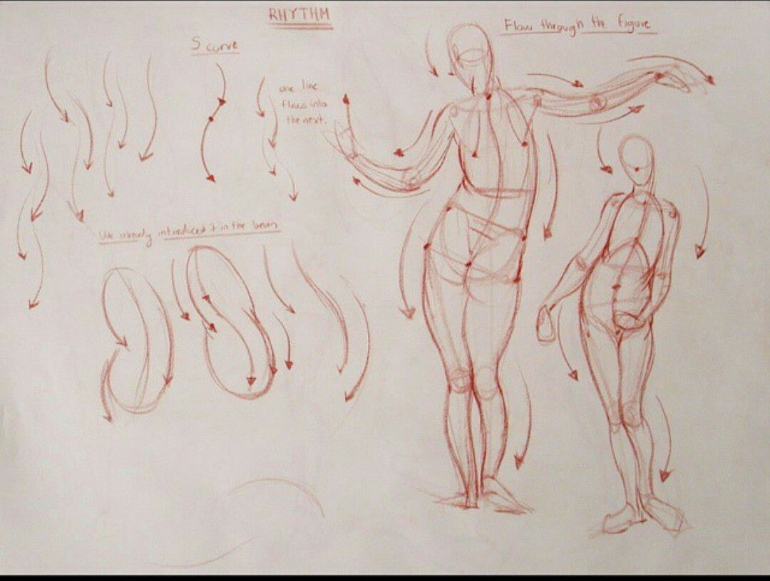Pin By Keteinporta On Rh Torso Pinterest Anatomy Draw And