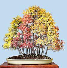 Resultado de imagen para hojas chinas