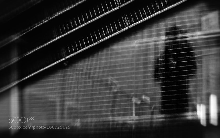 Shadows From Nowhere by paulo_abrantes