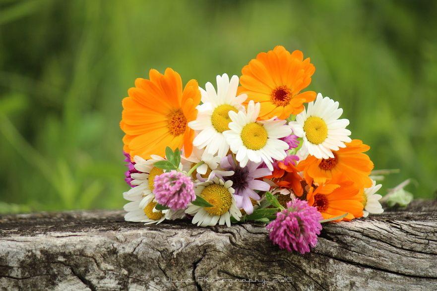Un bel mazzo di fiori di campo life pinterest for Costruire un mazzo di portico