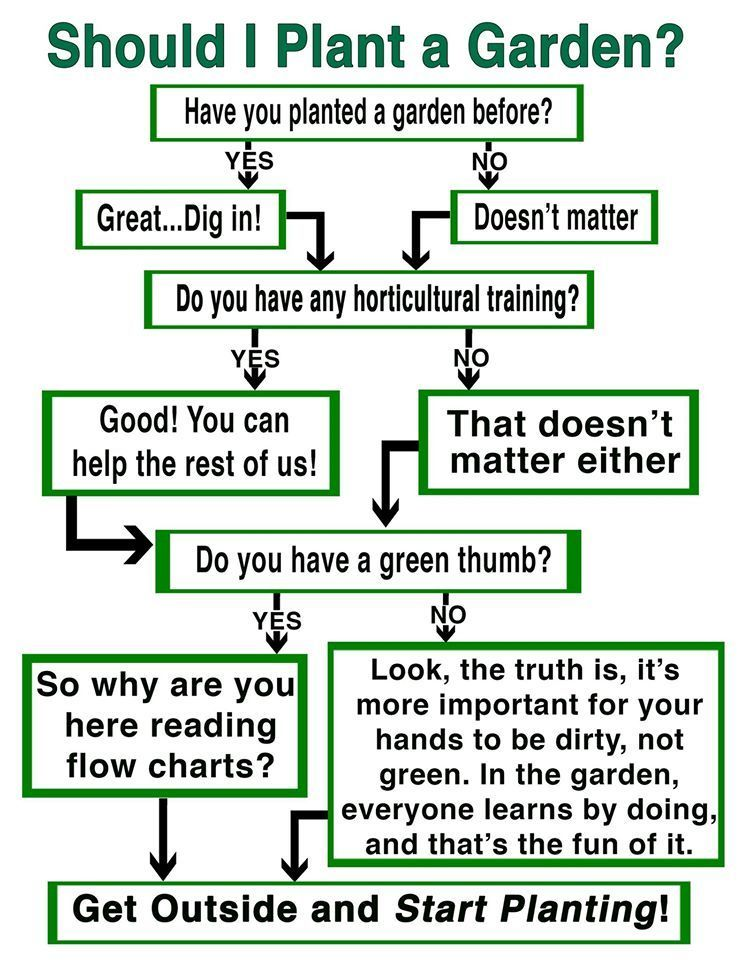 Should you plant a garden Check out the flow chart for the – When Do You Start Planting a Garden