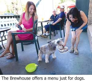 Dog Friendly Restaurants Santa Barbara