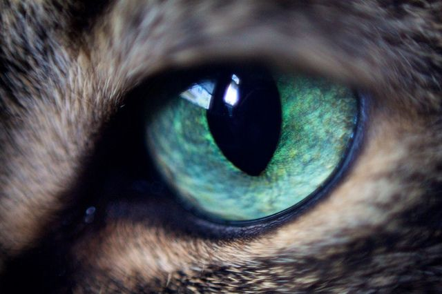 Cat Eye by jinnyjuice, via Flickr
