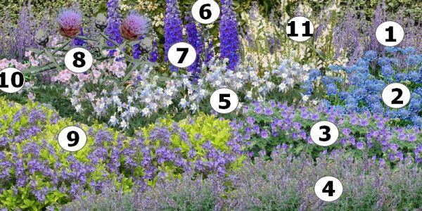 Cr er un massif de fleurs bleues plan de massif bleu 1 perowskia 2 scabieuse 3 g ranium vivace - Fleurs vivaces bleues ...