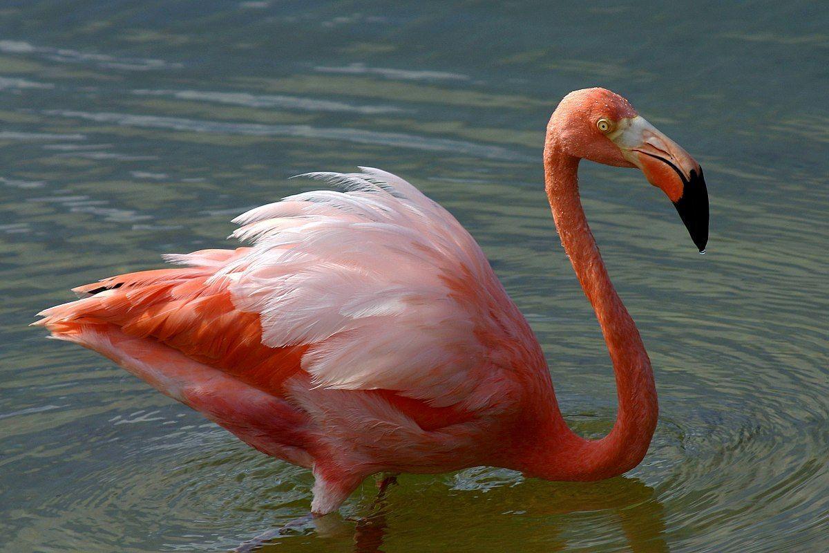 Top 10 Das Aves Mais Feias Do Mundo Com Imagens Flamingo Aves