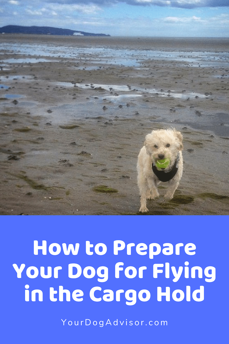 How To Prepare Your Dog For Flying In The Cargo Hold Dogs Dogs On Planes Your Dog