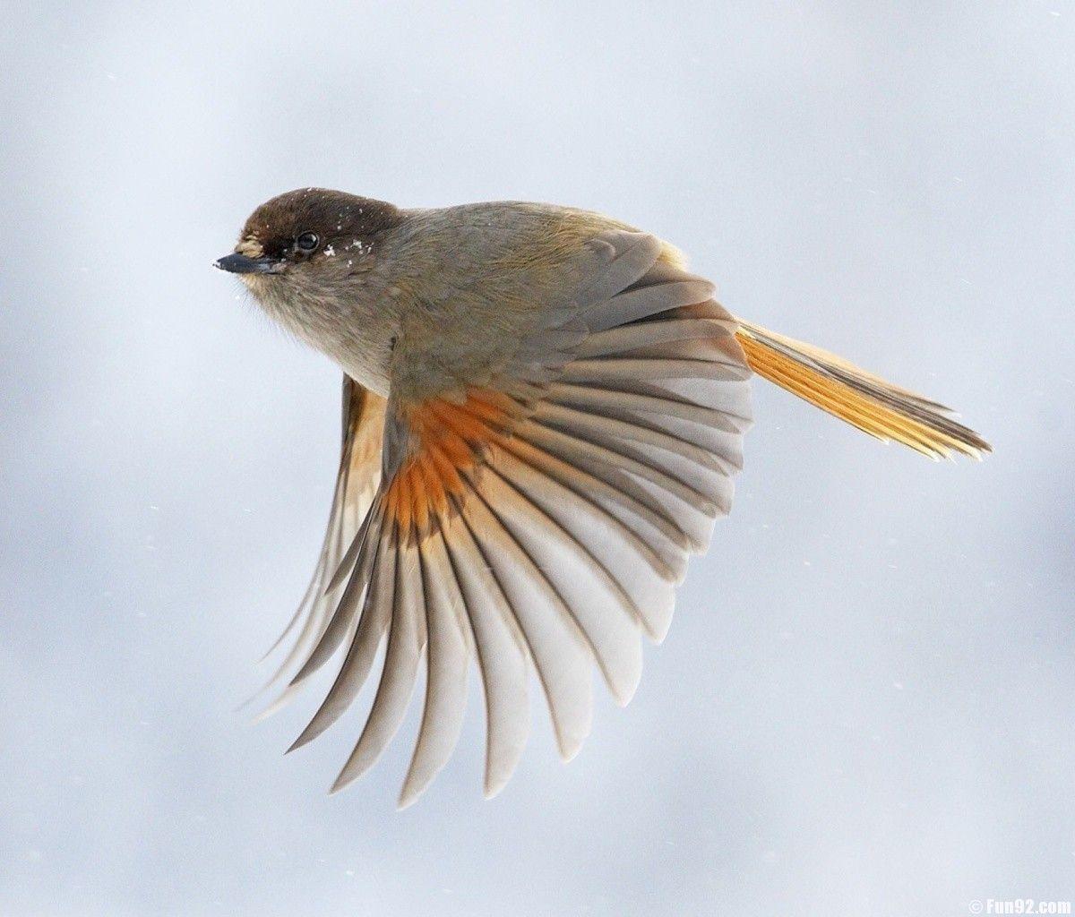Birds In Flight Wallpaper