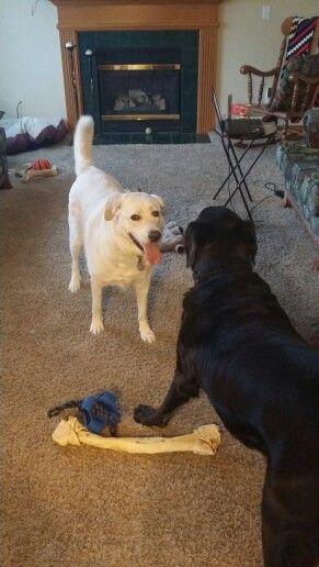 Rigby and Hotch
