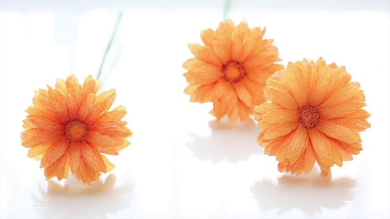 Crepe paper flowers gerbera daisy easy u simple full tutorial
