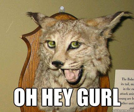 Oh hey gurl! Haaay!